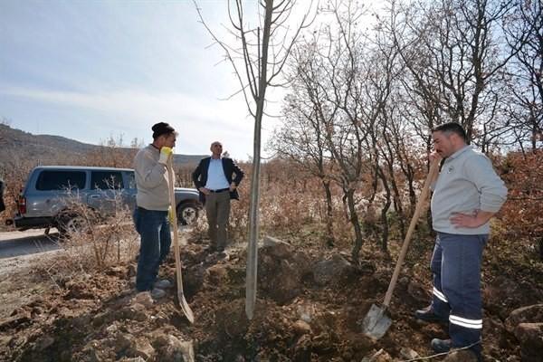 Porsuk mesire alanı ağaçlandırılıyor
