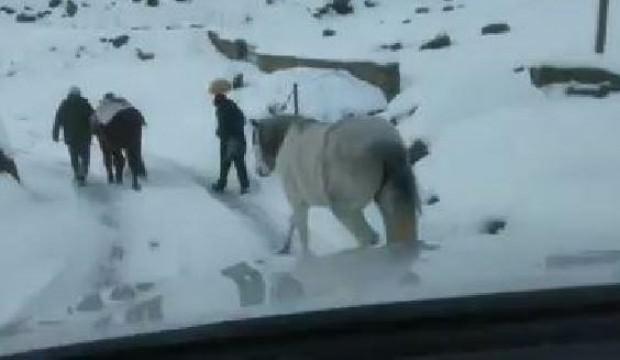 Rize terk edilen atlar donmak üzereyken bulundu