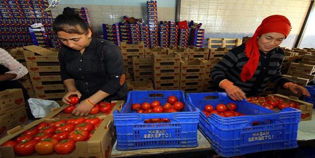 Rusya'dan yaş sebze için ilk talepler geldi