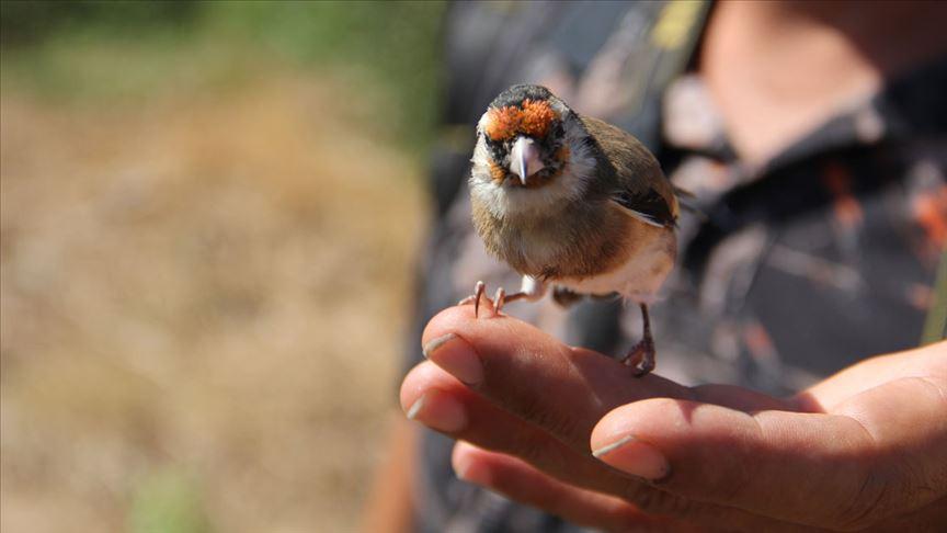 Saka kuşu yakalayanlara 9 bin 800 lira para cezası kesildi