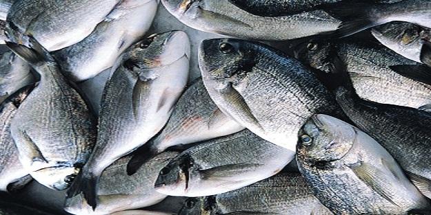 Samsun'da kaçak balık avlayanlara ceza