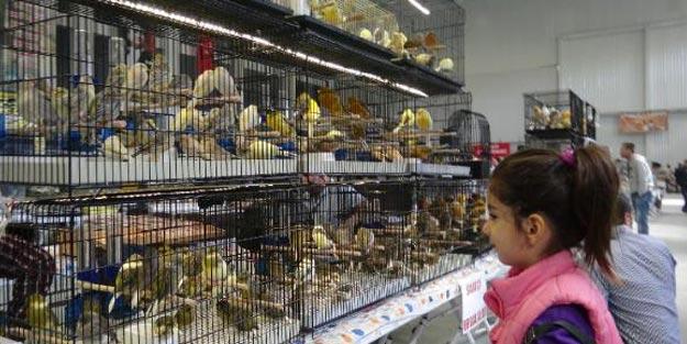Şanlıurfa'da 5 bin 706 kuşlu yarışma