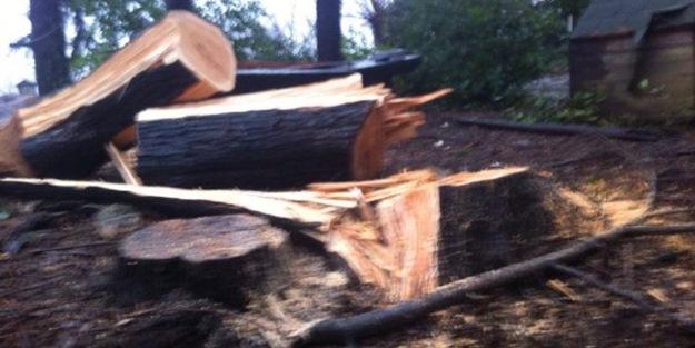 CHP, ağaç katliamına devam ediyor