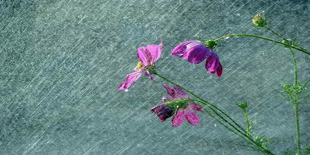 Semadan inen şifa: Nisan yağmuru