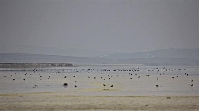 Seyfe Gölü turnalarla doldu