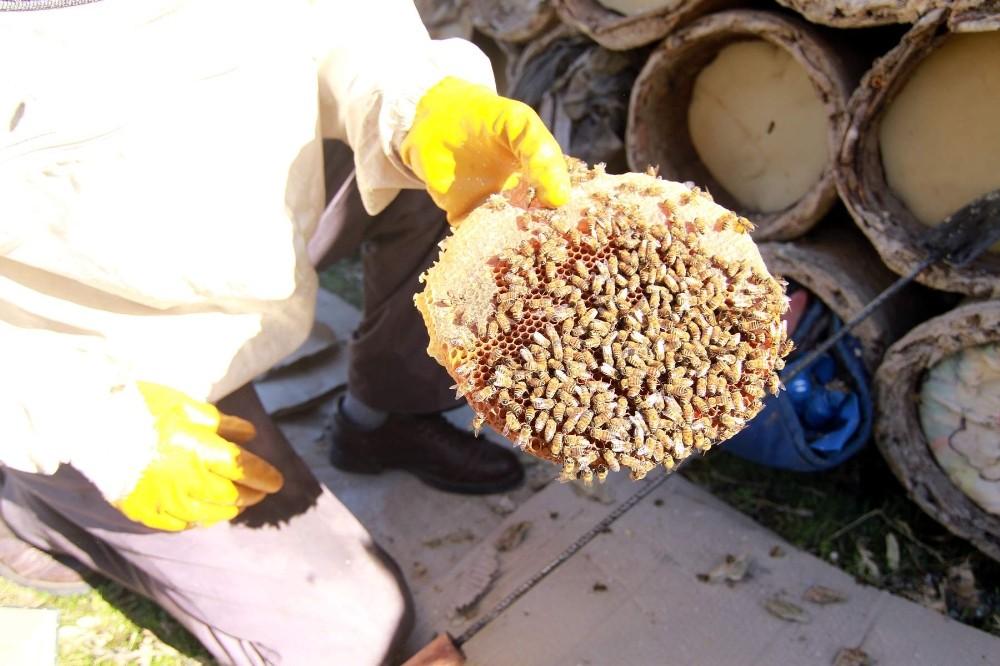 Siirt'te tarım ve hayvancılığa 3 milyon 200 bin lira destek