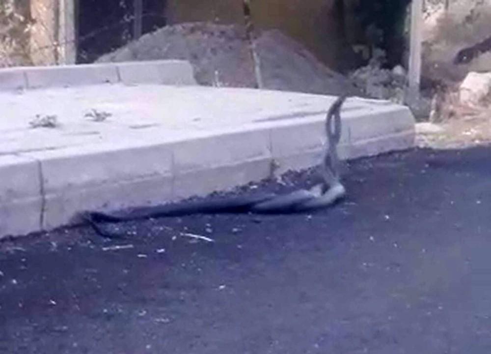 Siirt'te yılanların dansı kameraya yansıdı
