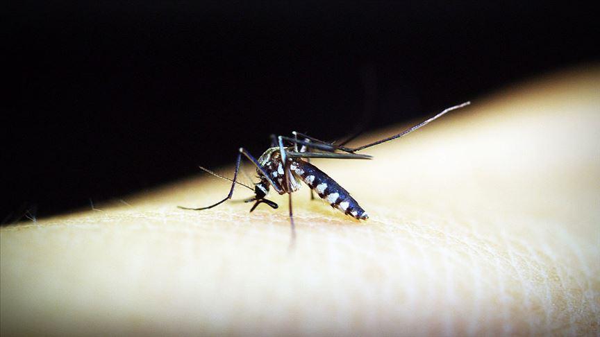 Sıtma dünya genelinde 2018'de 405 bin can aldı