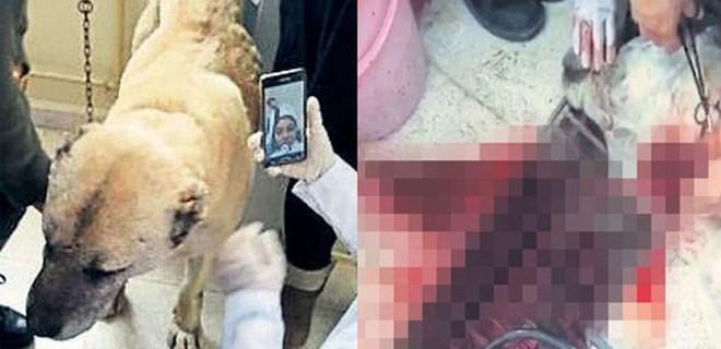 Sivas'ta skandal! Derste köpeği keserek öldürdüler...
