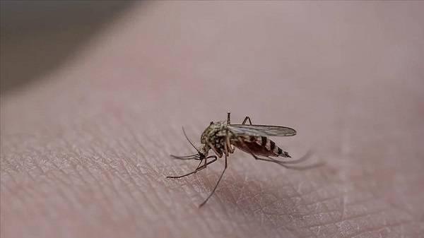 Sivrisinek ısırığına ne iyi gelir? Sinek kaşıntısı nasıl geçer?