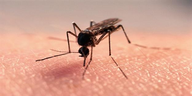 Sivrisineklerden kurtulmak için doğal formüller