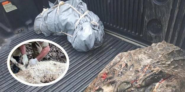 Şoke eden olay! Kaybolan balıkçı, dev hayvanın midesinden çıktı