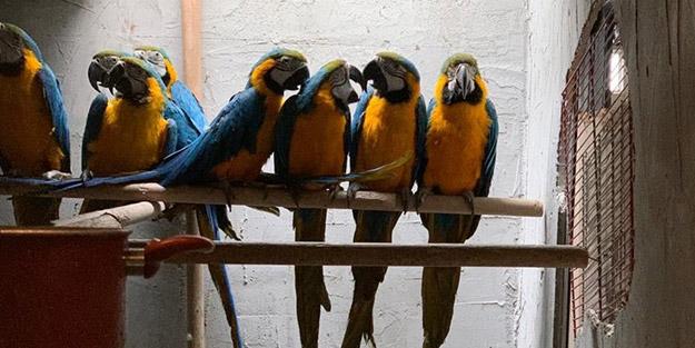 Sosyal medyadan papağan satan şüpheli yakalandı!