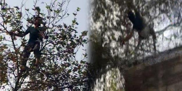 Sultanahmet Camii'nde intihar girişimi! Ağacın dalı kırılınca...