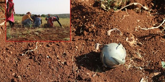Suriyeli çiftçilerin 'bomba' hasadı