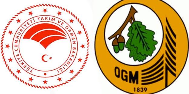 Tarım ve Orman Bakanlığı OGM orman mühendisi ve orman muhafaza memuru alım başvuru şartları