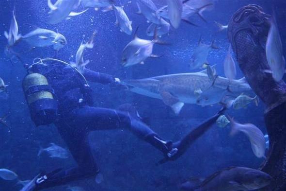 Tehlikeli görev! İstanbul'daki köpekbalıkları onlara emanet