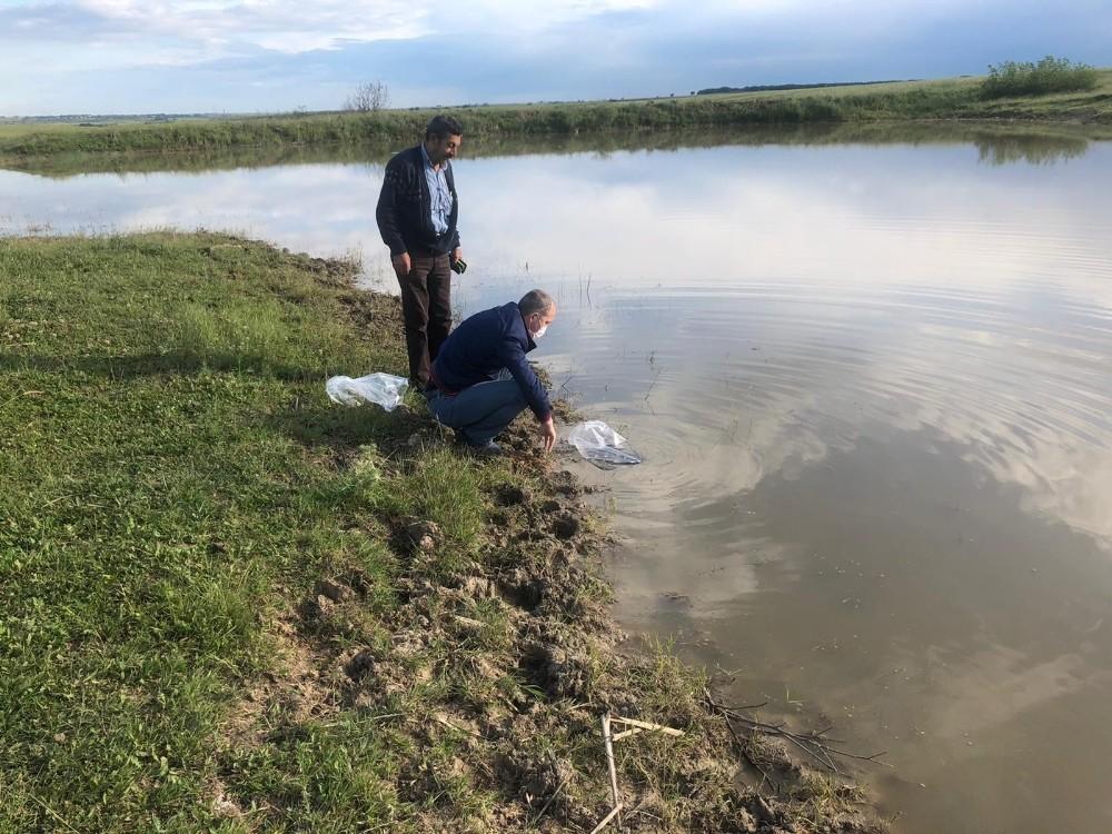 Tekirdağ'da 95 bin adet yavru sazan barajlara bırakıldı