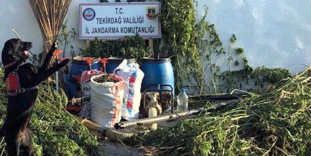 TEKİRDAĞ'DA HİNT KENEVİRİ OPERASYONU, 4 GÖZALTI
