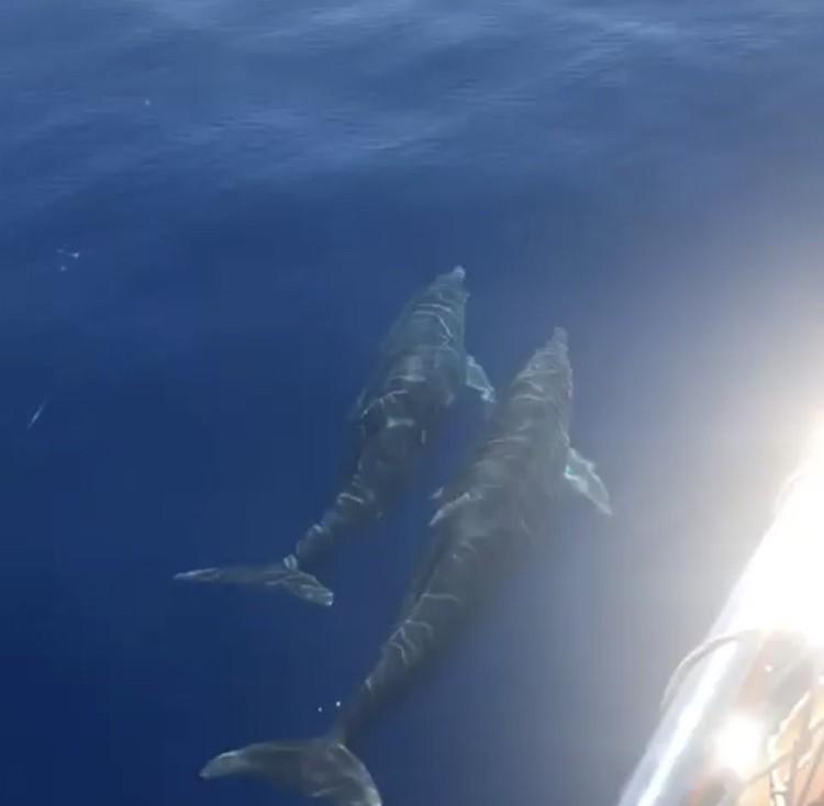 Tekne turundaki turistlere Yunus şov