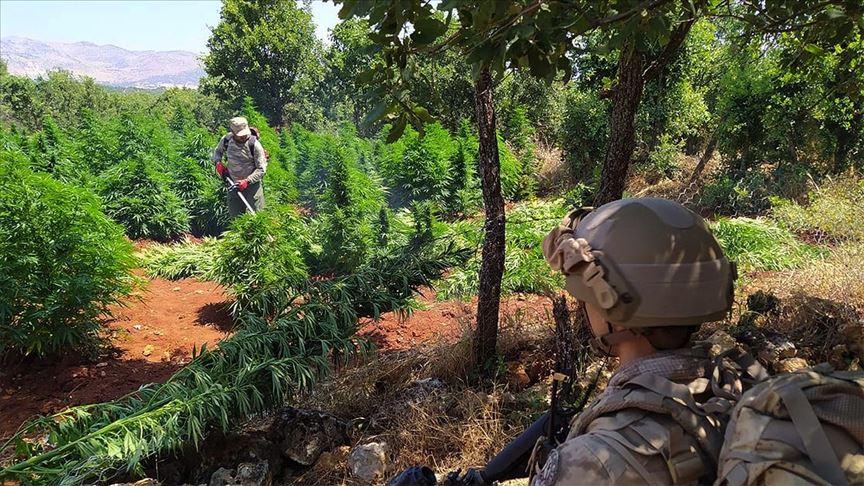 Terör örgütü PKK Doğu ve Güneydoğu'da vatandaşları uyuşturucu üretimine teşvik etmiş