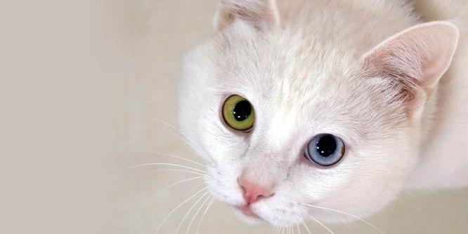 Kediler de köpekler kadar zeki olabilir