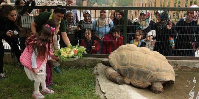 Kaplumbağa 'Tuki' 97 yaşına girdi