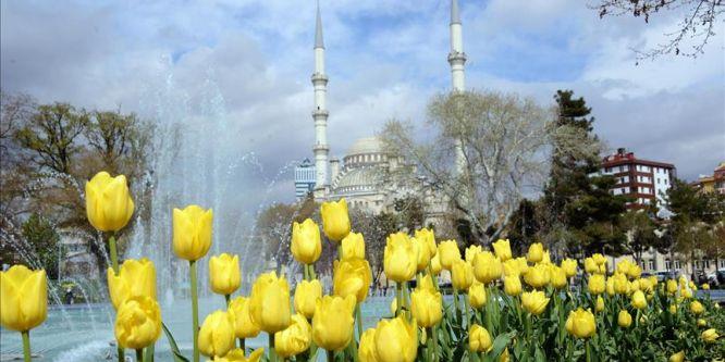 Konya'da lale mevsimi yaşanıyor