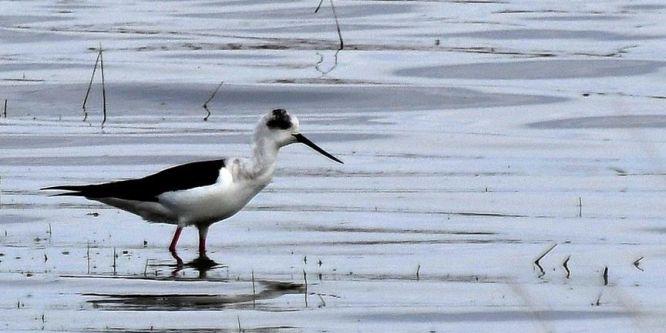 Doğu Anadolu'nun kuş cenneti: Kuyucuk Gölü