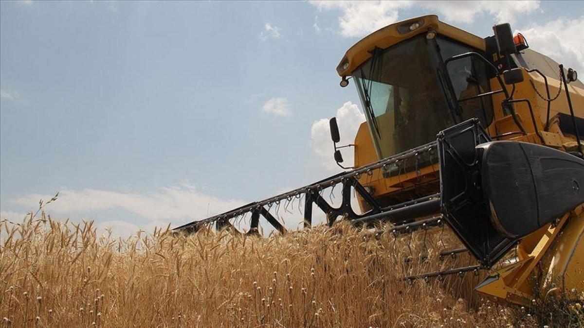 TMO: Ekmeklik buğday stoku yeterli