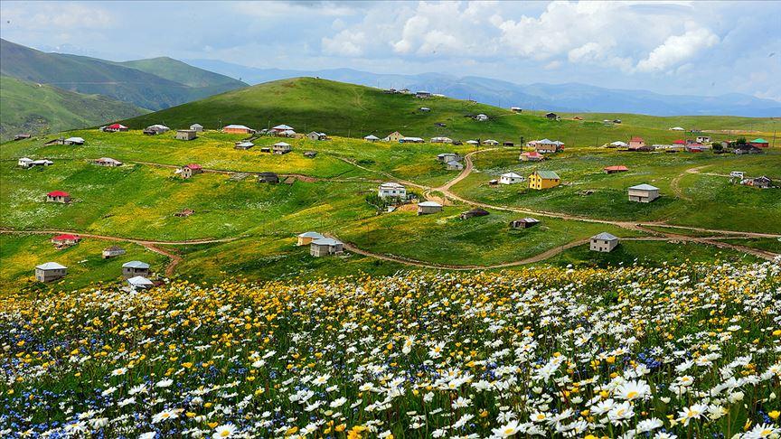 Trabzon'daki Barma Yaylası Turbalığı 'kesin korunacak hassas alan' olarak tescil edildi