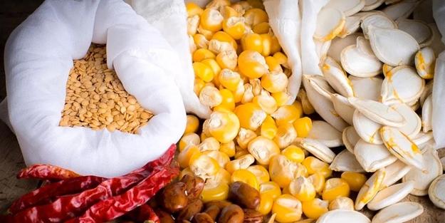 Türkiye'den ata tohumu hamlesi! Çalışmalar hızlandı