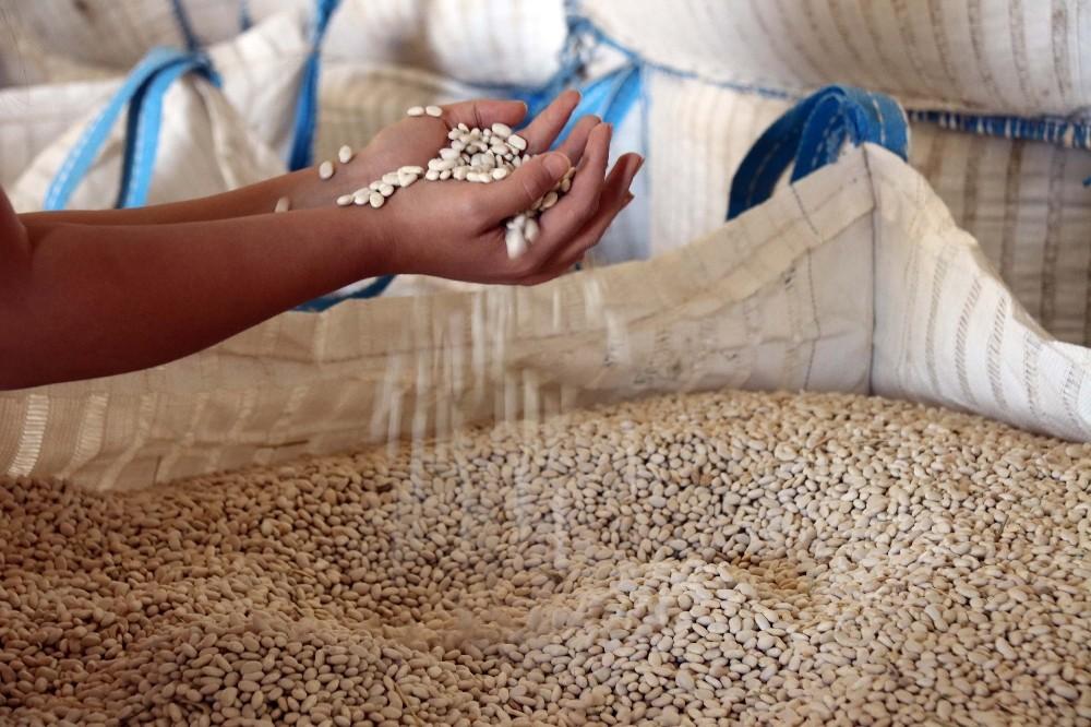 Türkiye'nin 57 şehrine Bitlis'ten fasulye ihraç ediliyor