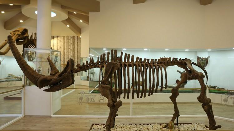 Türkiye'nin ilk zooloji ve doğa müzesi açılıyor!