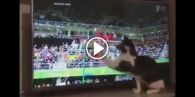 'Tutmasam düşüyordun' diyen kedi