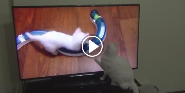 TV ekranında kendi bebekliğini seyreden kedi!