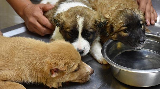 Üç yavru köpeğe işkence yapan asker gözaltına alındı