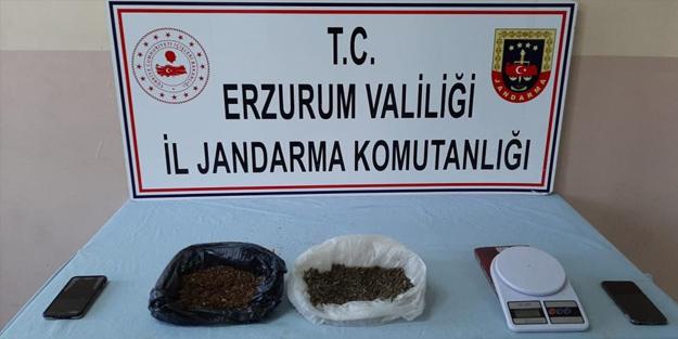 Uyuşturucu operasyonu: Çok sayıda bonzai ele geçirildi
