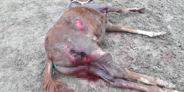 Vahşet! Aç kalan köpekler atları parçaladı