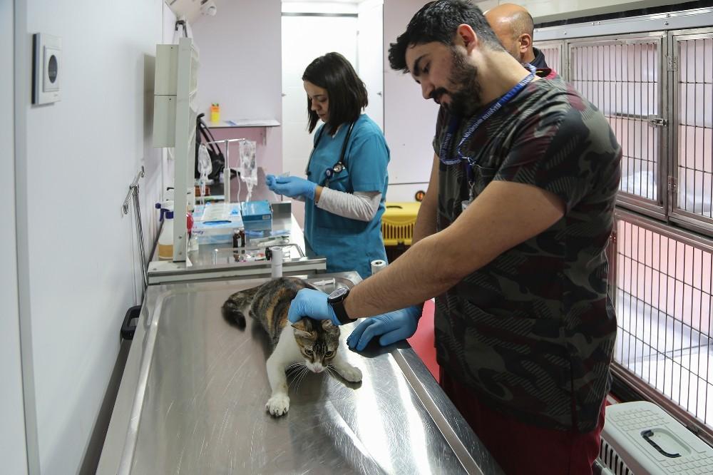 VetBüs ile Maltepe'de sokak hayvanlarına yerinde tedavi