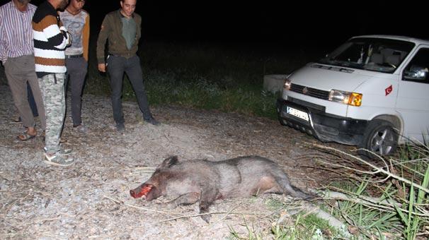 Yaban domuzu kazaya sebep oldu, yaralılar var