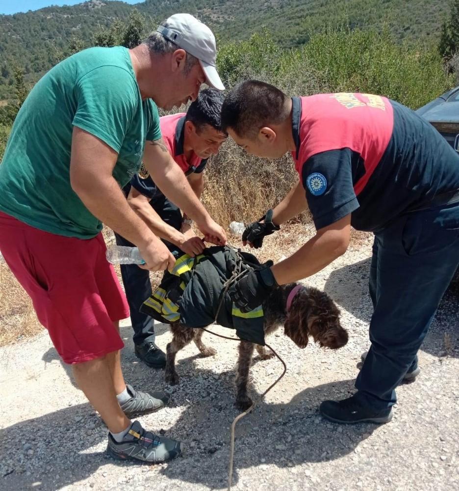 Yaralı köpeğin yardımına itfaiye koştu