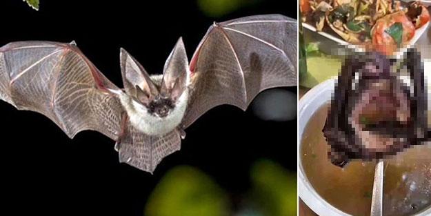 Yarasa çorbası nedir? Yarasa çorbası caiz mi? Yarasa yenir mi? Eti yenen kuşlar ve eti yenmeyen kuşlar hangileridir?