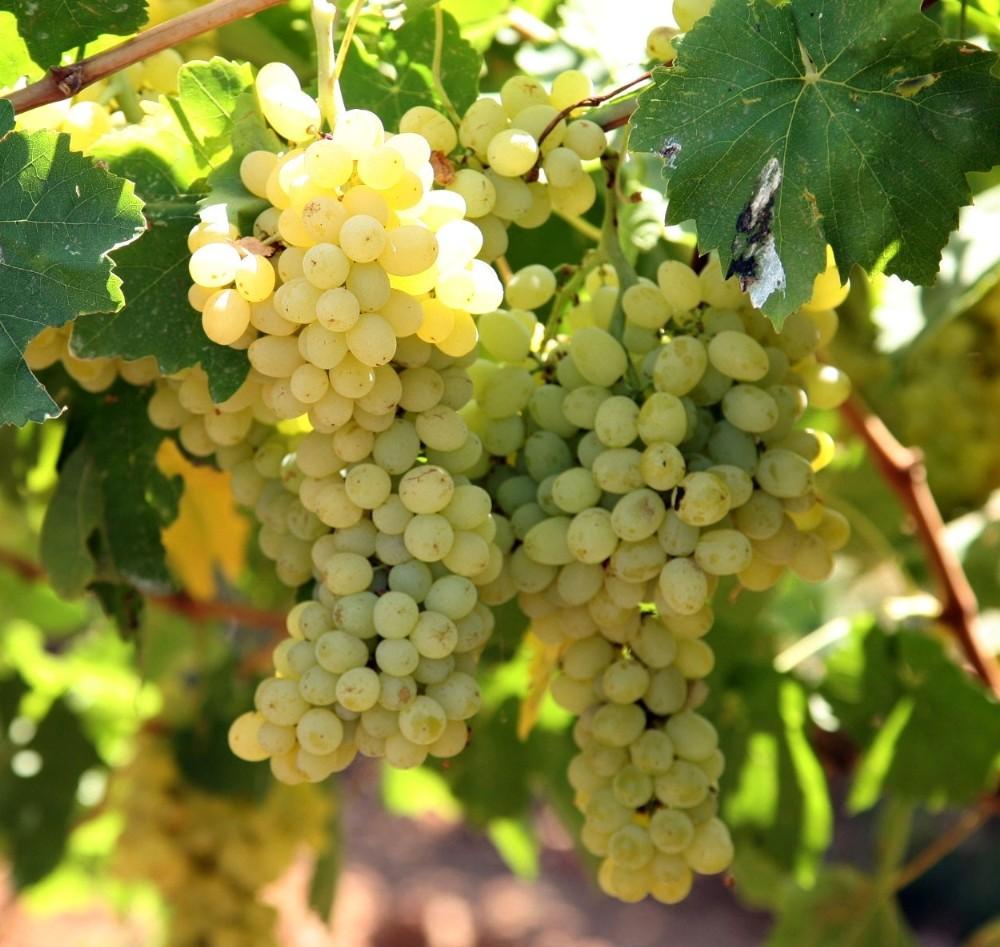 Yaş meyve sebze ve mamulleri ihracatı yüzde 25 arttı