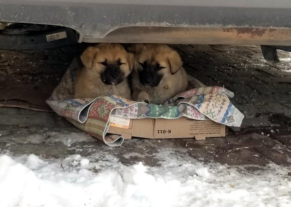 Yavru köpeklerin soğukta yaşam mücadelesi yürek burktu