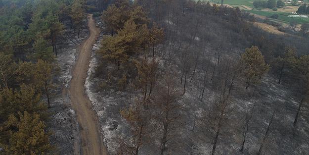 Yemyeşil örtü kömüre döndü! Gelibolu'daki orman yangınının boyutu gün ağarınca ortaya çıktı