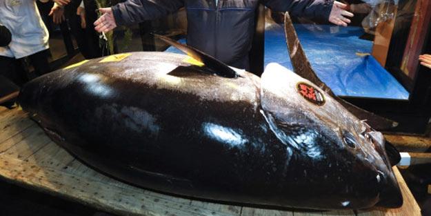 Yeni rekor kırıldı! Bu balığın fiyatı dudak uçuklatıyor