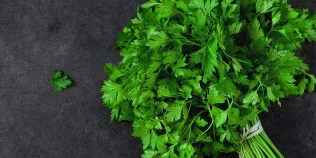 Yeşilliklerin mucizevi besini maydonozun faydaları