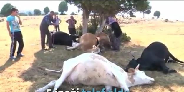 Yıldırım düşmesi sonucu hayvanları telef olan yaşlı çifte Kütahya Valiliği ulaştı