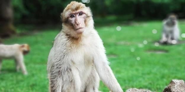 Yine Çin: Bu da 'maymun' virüsü! İlk ölüm gerçekleşti